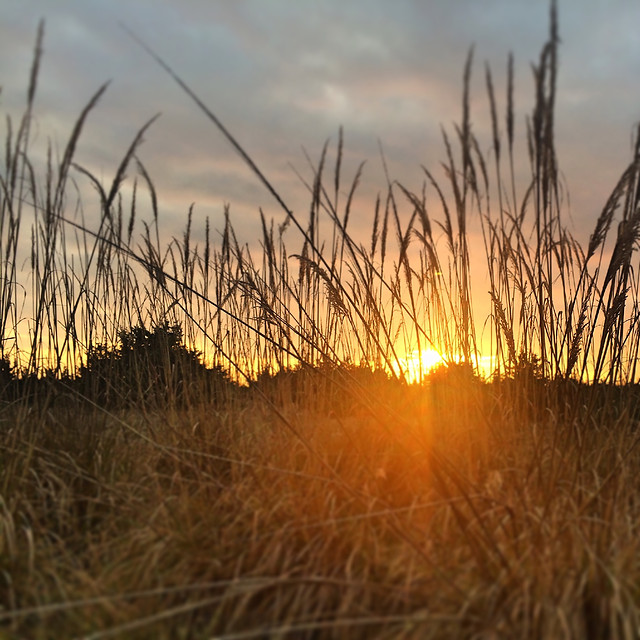 sunset-grass-nature-landscape-sun picture material