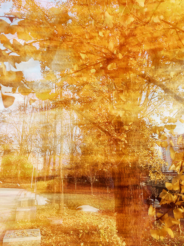 fall-gold-landscape-yellow-tree picture material