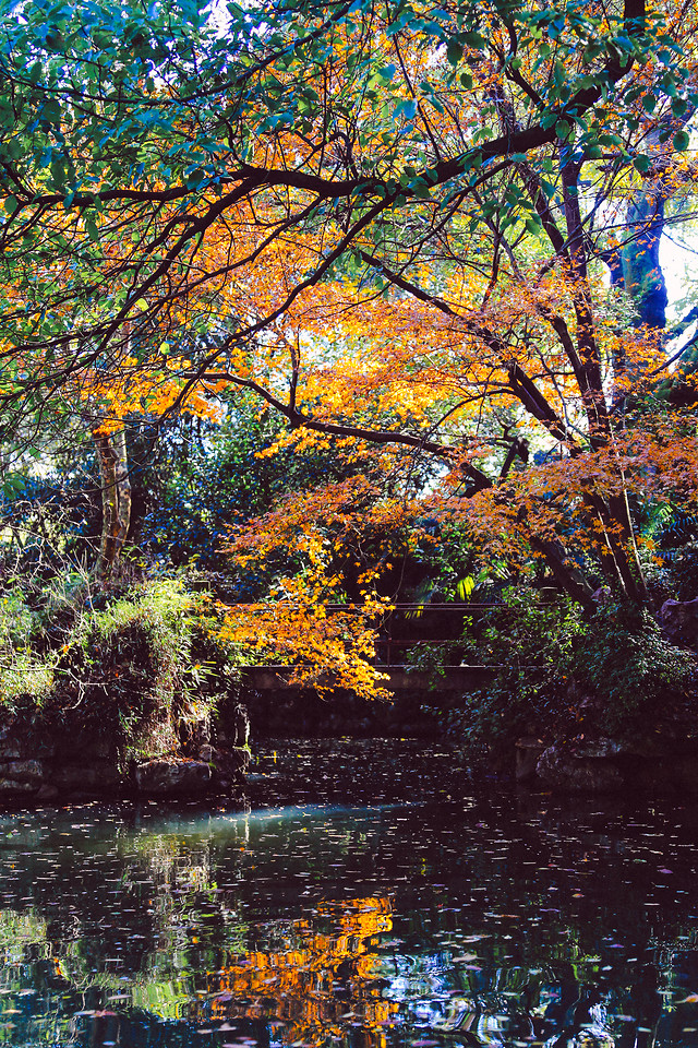 tree-leaf-fall-reflection-nature picture material