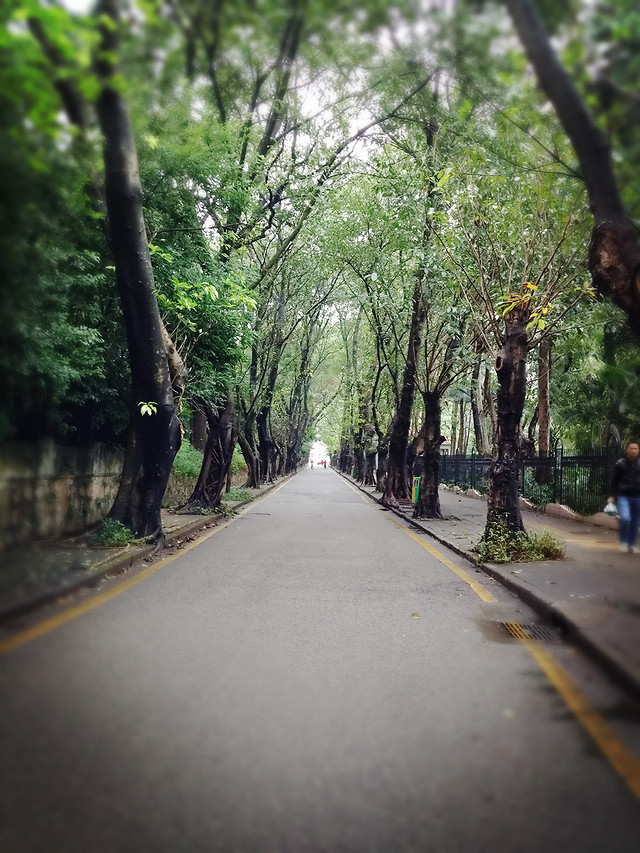 road-wood-tree-guidance-nature picture material