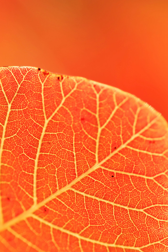 leaf-nature-fall-no-person-flora picture material