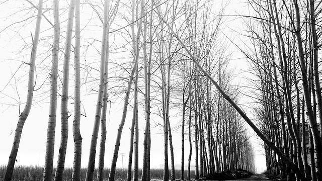 wood-winter-fog-tree-landscape picture material