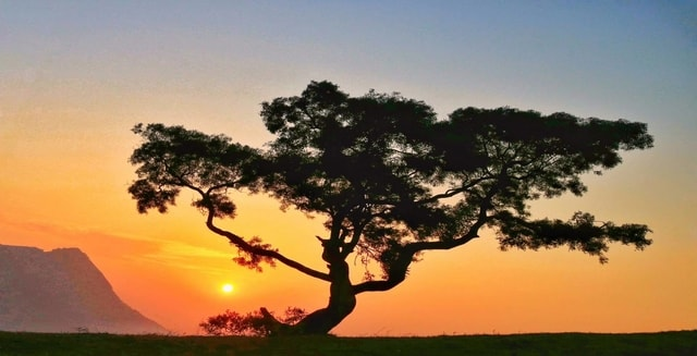 tree-natural-landscape-sky-nature-woody-plant 图片素材