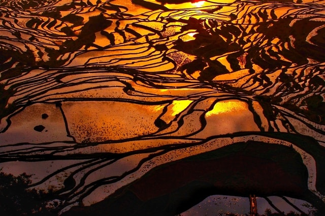 nature-water-geological-phenomenon-rice-cultivation-reflection 图片素材