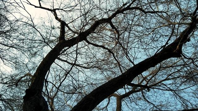 tree-branch-nature-sky-woody-plant 图片素材