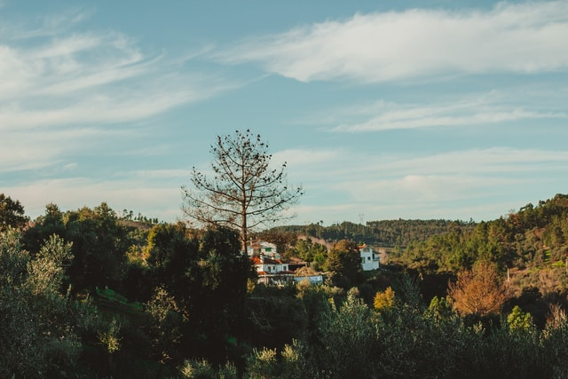 portugal-trees-castelodobode-nature-tree picture material