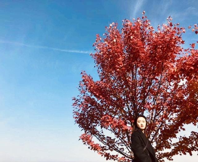 tree-red-sky-leaf-woody-plant 图片素材