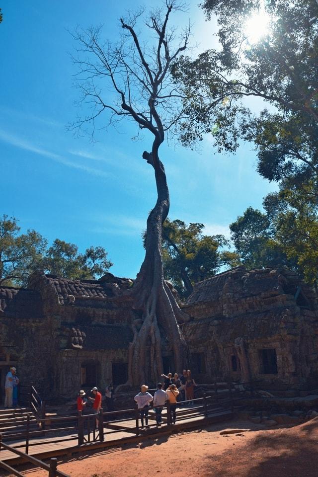 temple-tree-sky-woody-plant-plant 图片素材