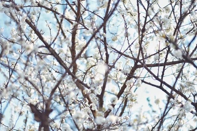 branch-tree-twig-plant-woody-plant 图片素材