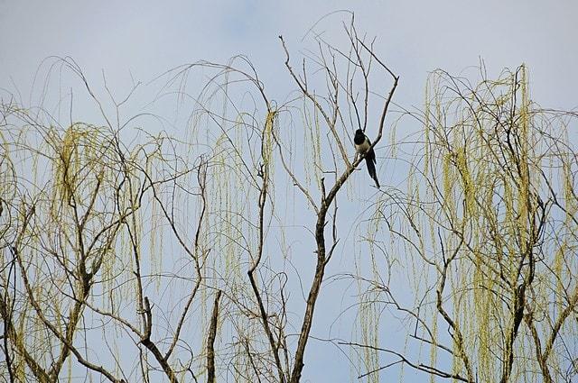 branch-tree-twig-woody-plant-plant 图片素材