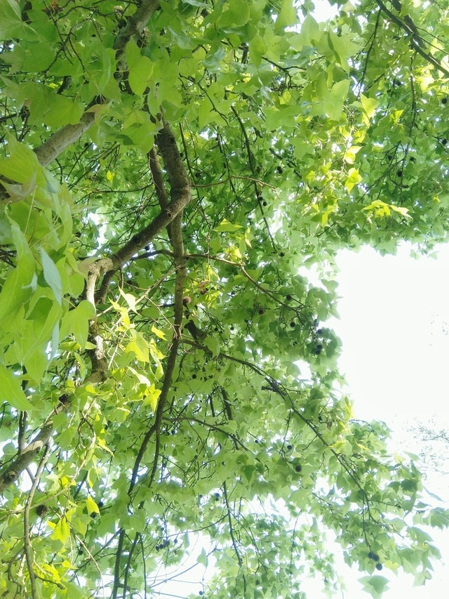tree-plant-green-woody-plant-branch 图片素材
