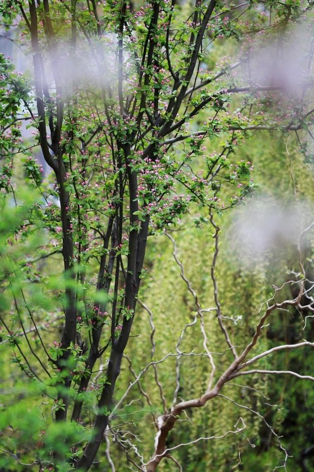 spring-breath-flower-plant-tree-vegetation 图片素材