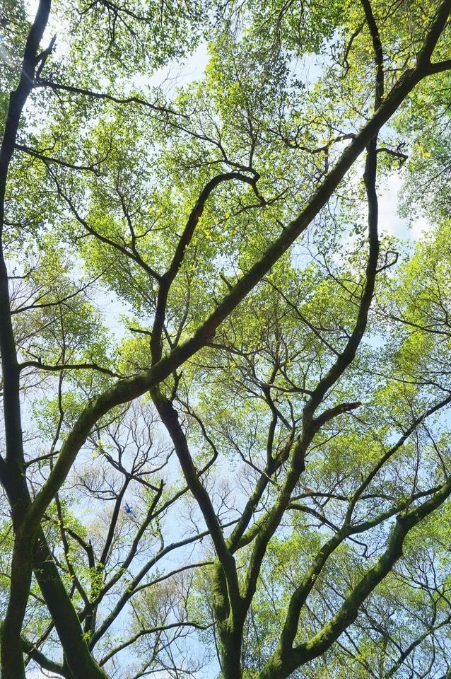 tree-branch-nature-vegetation-woody-plant 图片素材