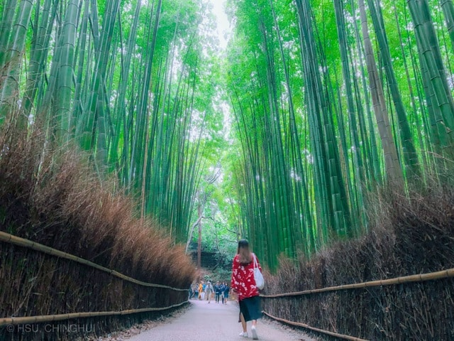 kyoto-bamboo-forest-trail-back-view-travel-japan 图片素材