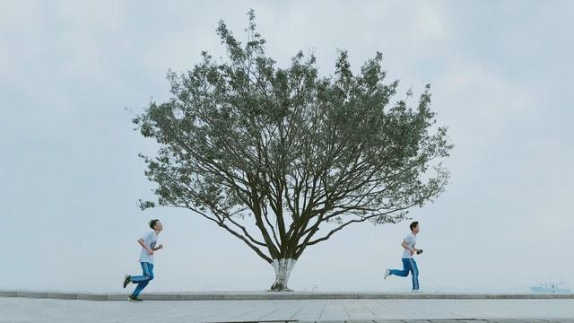 huawei-p20-pro-tree-photograph-woody-plant-male 图片素材