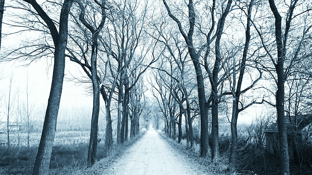 winter-tree-wood-fog-landscape picture material