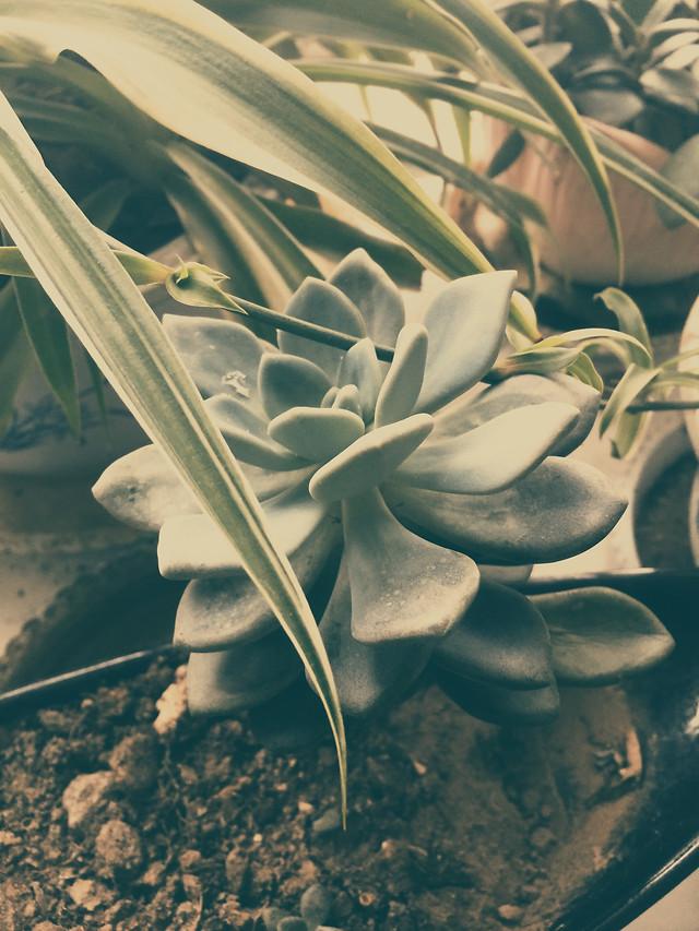 flower-nature-plant-desktop-flora picture material