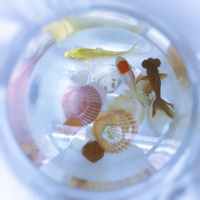 glass-desktop-color-closeup-bowl 图片素材