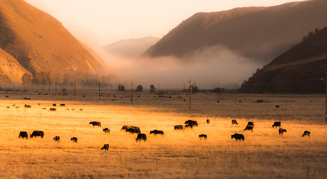 no-person-cattle-travel-landscape-outdoors picture material