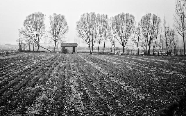 landscape-tree-farm-agriculture-no-person picture material