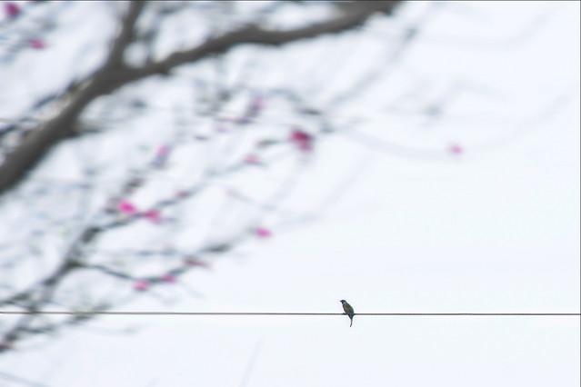winter-snow-desktop-no-person-blur picture material
