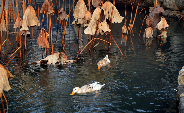 water-no-person-bird-nature-lake picture material