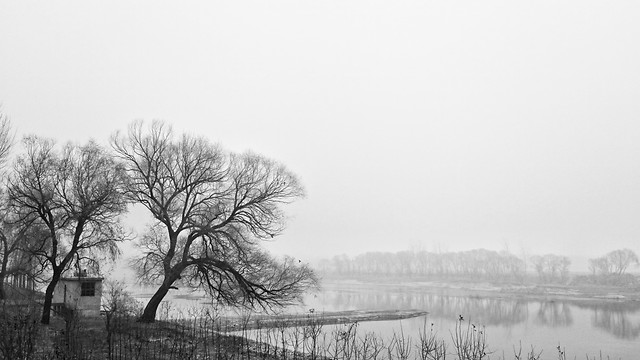 fog-tree-winter-landscape-monochrome picture material
