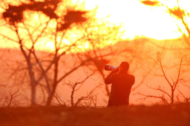 sunset-backlit-tree-landscape-sun picture material