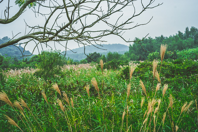 nature-no-person-landscape-summer-grass picture material