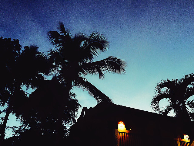 palm-no-person-beach-tree-sky picture material