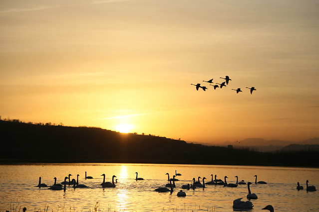 water-sunset-dawn-lake-bird picture material