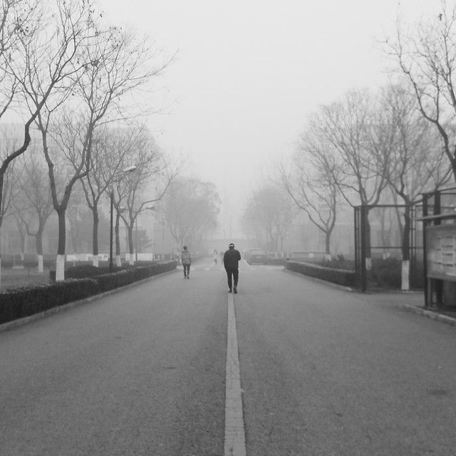 road-fog-street-mist-tree picture material