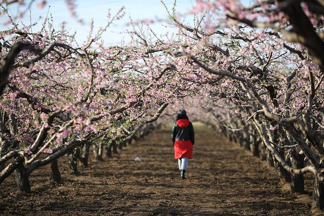 tree-branch-landscape-season-flower 图片素材