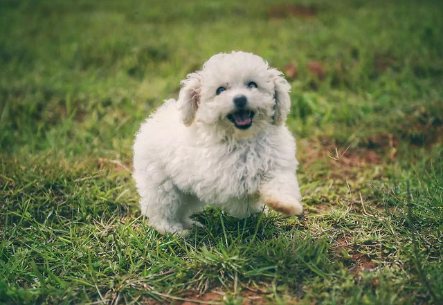 cute-dog-mammal-grass-animal picture material