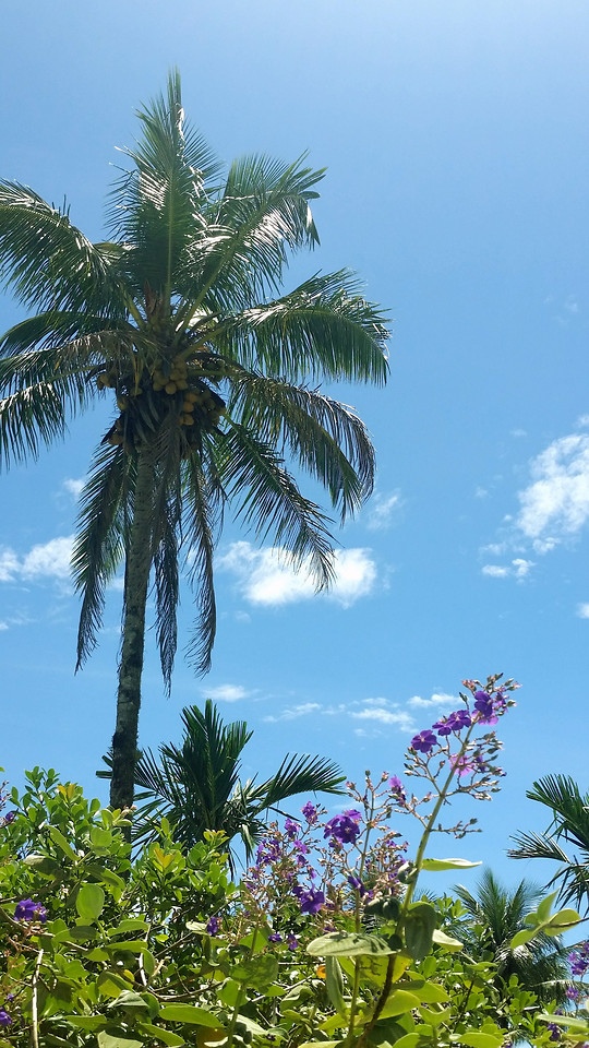palm-tropical-summer-tree-beach picture material