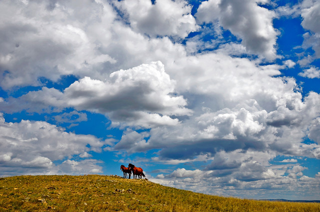 sky-cloud-no-person-landscape-grassland picture material