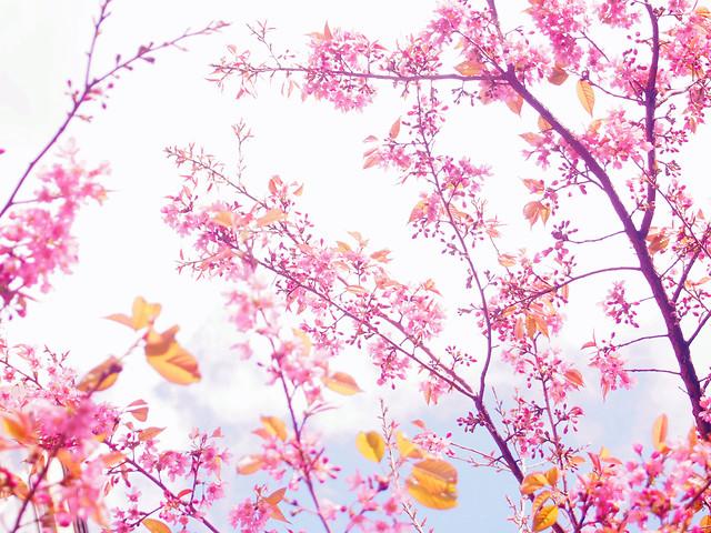 season-flower-flora-branch-desktop picture material