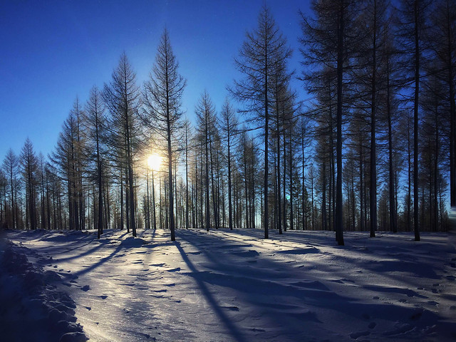 snow-winter-wood-landscape-tree picture material