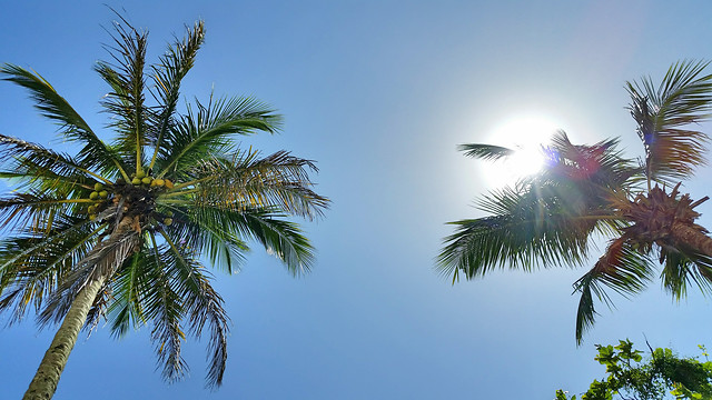 palm-tropical-beach-tree-exotic picture material
