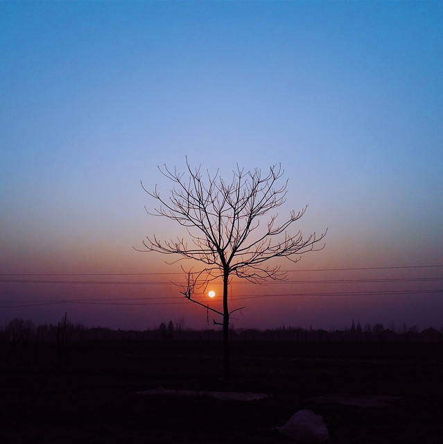 sunset-landscape-dawn-tree-silhouette picture material
