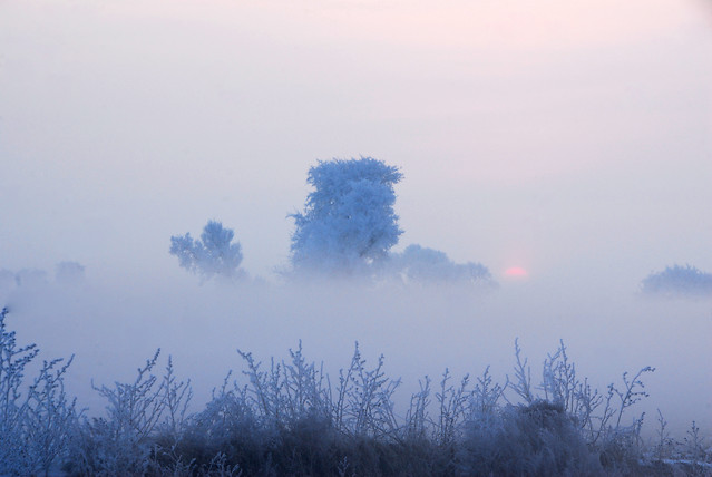winter-nature-landscape-fog-weather 图片素材