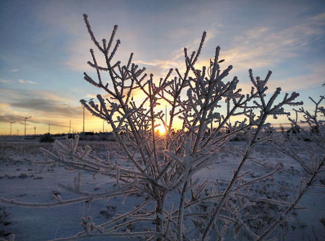 winter-landscape-snow-frost-tree picture material