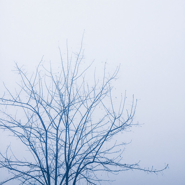 winter-snow-tree-frost-sky picture material