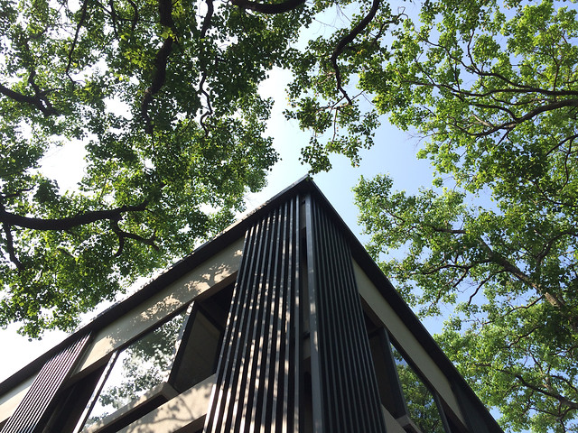 tree-wood-sky-building-architecture 图片素材