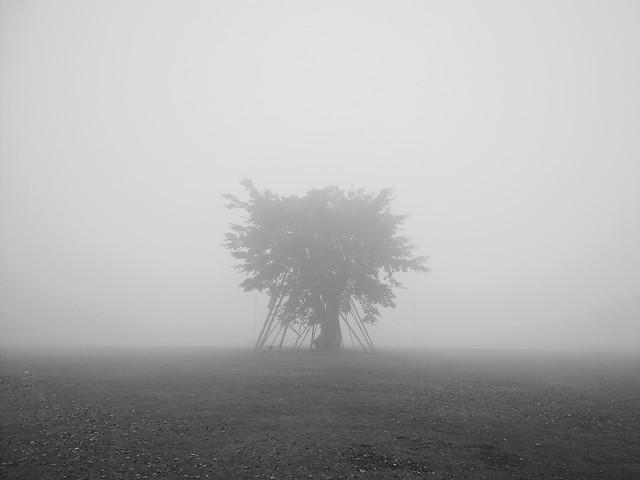 fog-landscape-mist-monochrome-dawn picture material