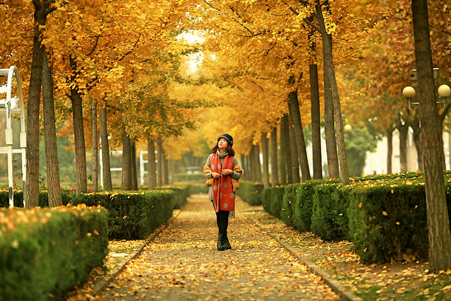 fall-tree-park-leaf-guidance 图片素材