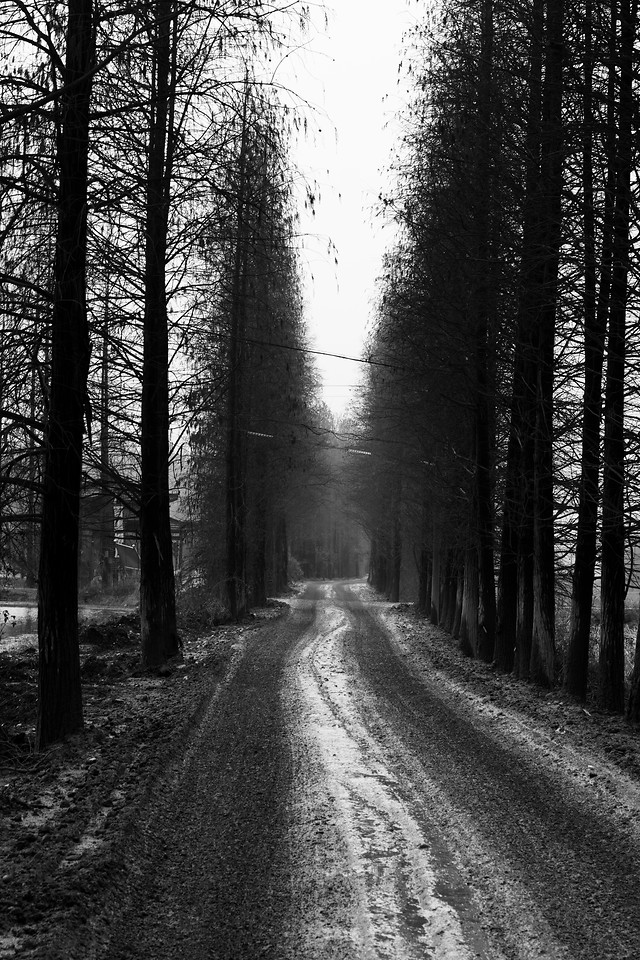 road-landscape-no-person-wood-tree picture material