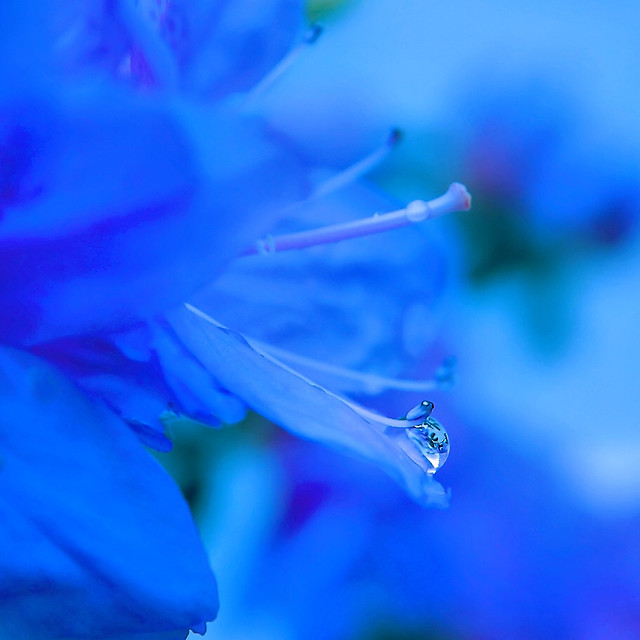 nature-flower-blur-flora-color picture material