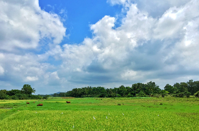 rural-field-grass-pasture-nature picture material