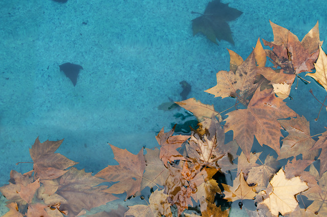 no-person-blue-fall-leaf-water picture material
